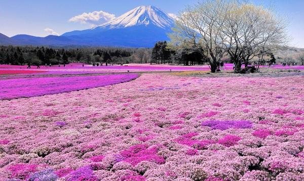 địa điểm du lịch Nhật mùa thu