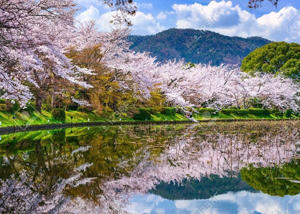 kyoto mùa xuân